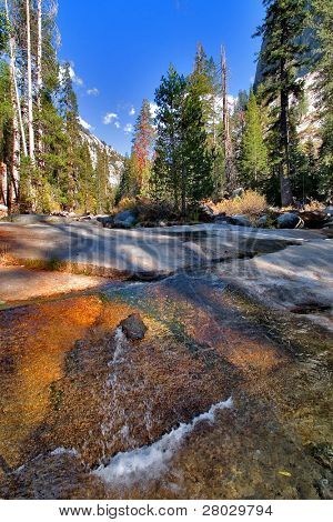 Shallow brook in a valley' surrounded by giant spruces. More magnificent pictures from the American and Canadian National parks you can look hundreds in my portfolio. Welcome!