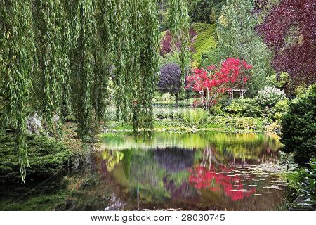 A silent pond and a tree on coast in beautiful to Butchart garden in Canada