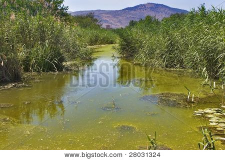 Stagnant water covered by ooze and mountains in the distance