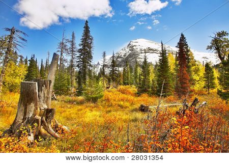 Brilliant colors of autumn in cold northern reserve