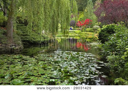A pond covered by leaves of a lily and surrounded by blossoming bushes and weeping willows