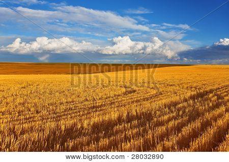 Mediodía solar otoño en campos de Montana