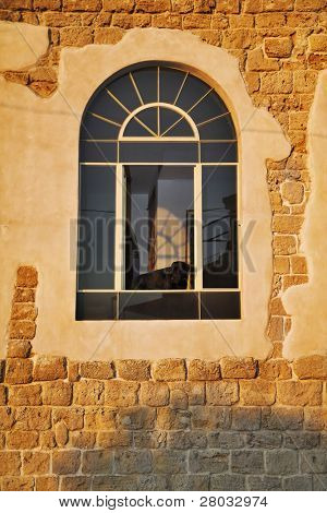 The greater black thoroughbred dog looks from a window of an ancient building at a solar decline.