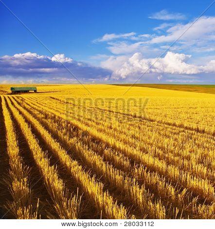 Solar autumn midday on fields of Montana