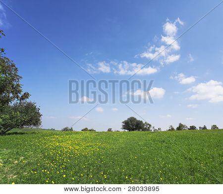 Mittag auf blühenden Hügeln der heiße Küste von Mittelmeer - Gras, Camomiles und Bäume