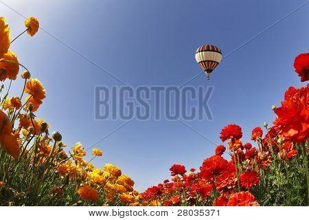 """große Ballon über blühende Wiesen, fotografiert von ein Ziel """"Fish-Eye"""""""