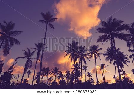poster of Sunset In Tropical Nature Background. Palm Trees Silhouettes Background. Tropical Nature In Sunset.