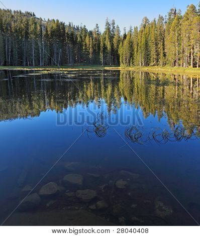 Early clear autumn morning. The superficial dark blue lake surrounded by pines in Yosemite national park
