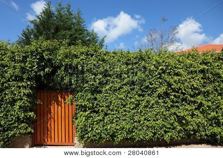Yellow wooden gate in the high hedges