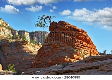 """The famous round rock of red sandstone and with a little """"jerky"""" tree.Zion  National Park, sunset"""