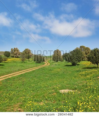 The easy clouds  in the high spring sky. The rural footpath crosses a meadow with green trees