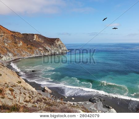 Two gray pelicans in clear serene day are turned over coast of Pacific ocean