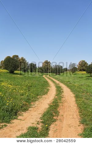 Spring in Israel. March at noon, the rural dirt road passes through green meadows and fields