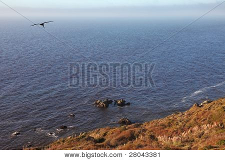 Gray pelican in clear serene day are turned over coast of Pacific ocean