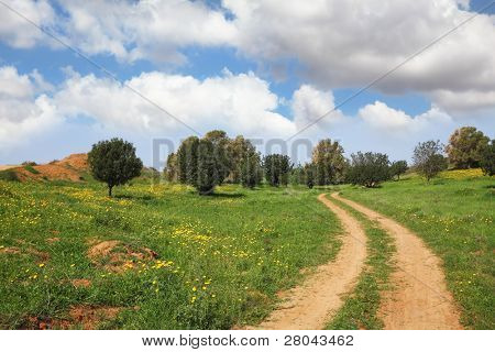 Spring in Israel. Cloud in March at noon, the rural dirt road, field and small trees
