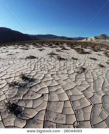 Dawn in Death Valley. Dry brush on white cracked soil.