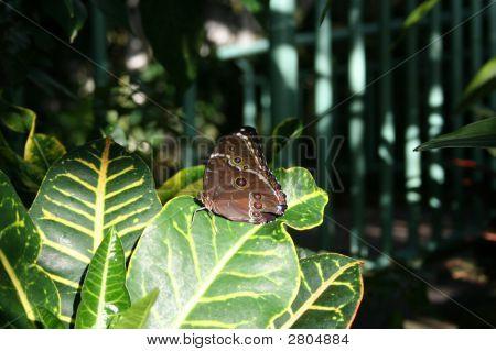 Butterfly In A Garden