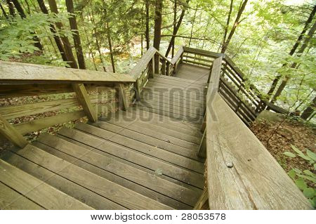 boardwalk staircase through the woods