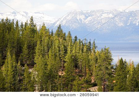 Lake Tahoe, pine trees and the Sierra Nevada mountains
