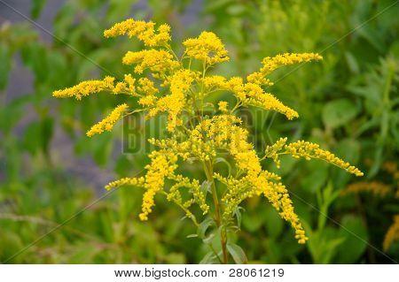 flor amarilla y verde de las plantas