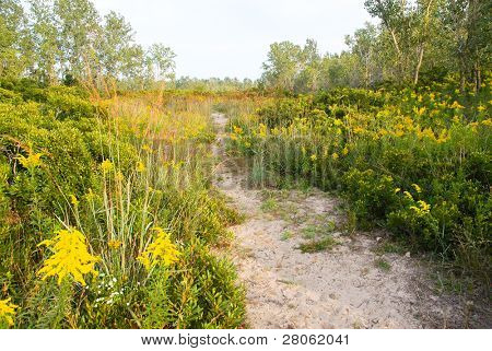 sandy beach plants and walking path