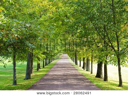 tree lined lane