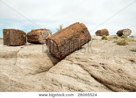 petrified wood on a rock outcropping