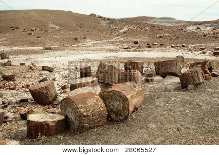 petrified wood and desert hills
