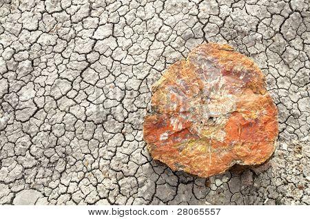 petrified wood on cracked desert playa