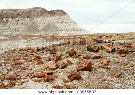 petrified wood and painted desert mesa