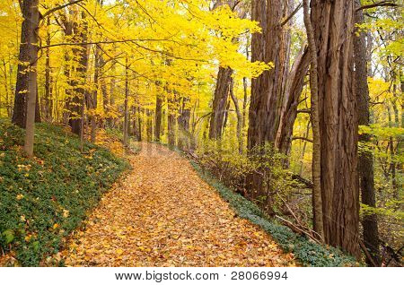 leaves covering a trail through the forest in autumn