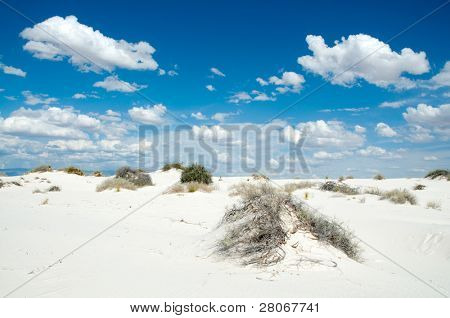 desert plants growing on white sand dunes