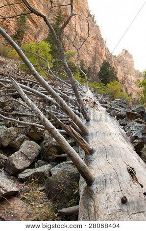fallen tree on a rock scramble