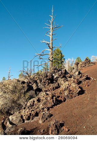 red volcanic rock soil