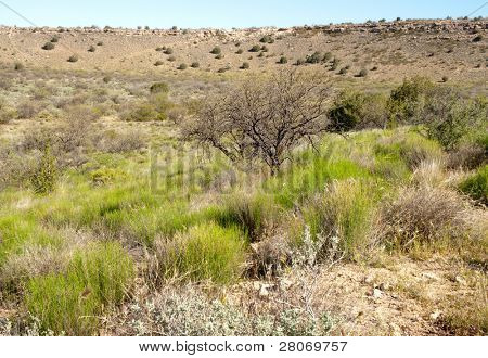 desert bushes and hills