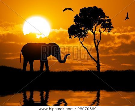 Silhouette der Elefant. Element des Designs.