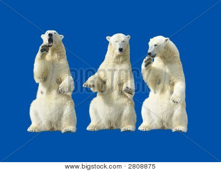 Tres ella - osos