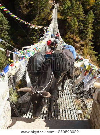 Yaks And People On Rope