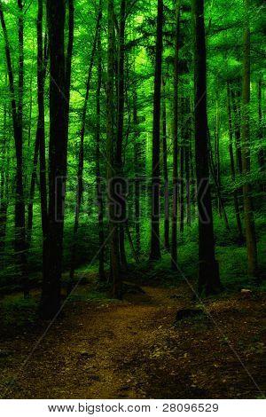 beautiful rain forest in Germany near Salzburg