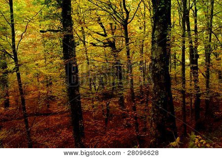 autumn at the forest, portuguese national park