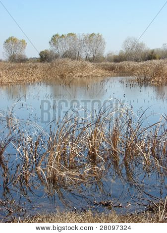 Great Valley Grasslands, Merced County, California