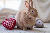 Rufus Rabbit With Heart In Vintage Setting, Soft Natural Tones poster