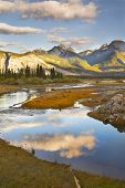 image of boggy  - The silent river surrounded by fur - JPG