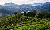 Tea Fields Of Sri Lanka At Single Tree Hill, Nuwara Eliya, Sri Lanka poster
