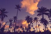 Sunset In Tropical Nature Background. Palm Trees Silhouettes Background. Tropical Nature In Sunset.  poster