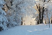 image of winter scene  - Christmas morning - JPG