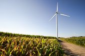 Michigan Wind Farm. Wind Turbine In The Middle Of A Corn Field In The Farm Land Of The American Midw poster