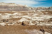 pic of paleozoic  - blue mesa painted desert and petrified wood - JPG
