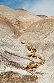 image of paleozoic  - badlands and petrified wood pieces - JPG