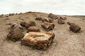 foto of paleozoic  - large chunks of petrified wood - JPG